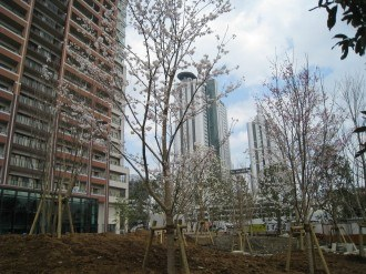 THE KOSUGI TOWERの桜