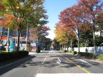 南部沿線道路の紅葉1