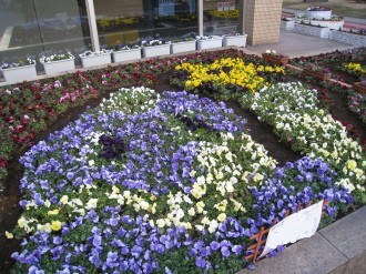 中原区役所の区民デザイン花壇1